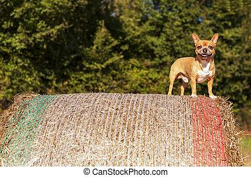 Puppy on hay bale