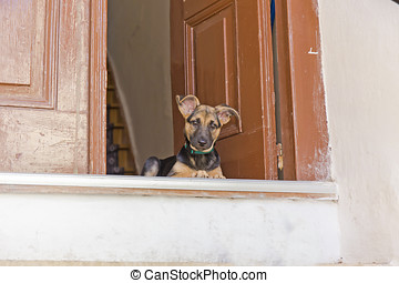 Puppy on the doorstep