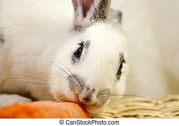 puppy pet rabbit eating a carrot