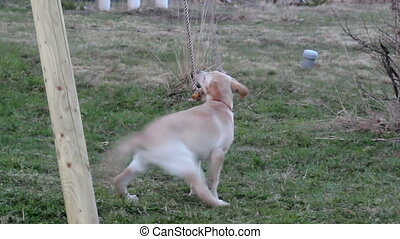 Puppy playing on wooden stick