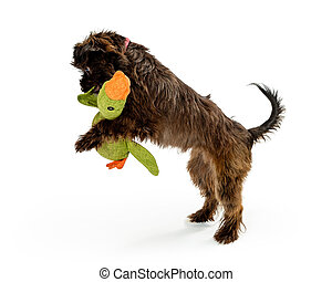 Puppy Playing With Toy on White