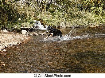 Puppy Splashing in Water