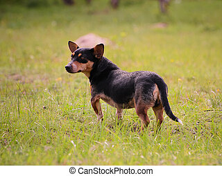 Puppy standing in the grass outdoors