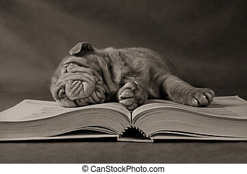Puppy Studying in the Morning - Puppy Fell Asleep in Early ...