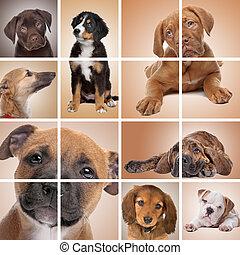 puppy themed collage - collage of puppy dogs....