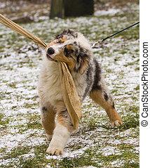puppy training - puppy in action in crossbite