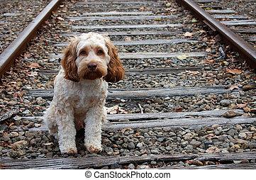 puppy, verloren