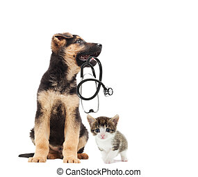 puppy vet and stethoscope