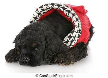 puppy wearing dog coat