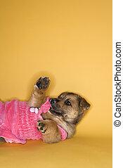 Puppy wearing dress.