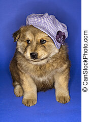 Puppy wearing hat.