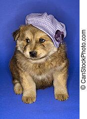 Puppy wearing hat.