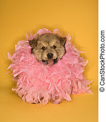 Puppy wearing pink feather boa.