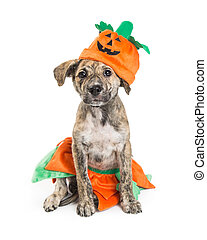 Puppy Wearing Pumpkin Halloween Costume
