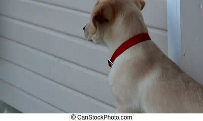 Puppy with a red collar