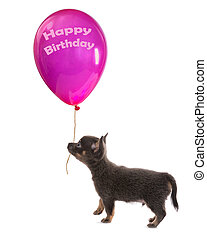 Puppy with birthday balloon
