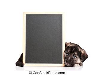 Puppy with blackboard