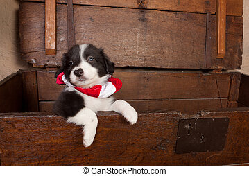 Puppy with christmas