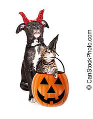 Puppy With Kitten in Haloween Pumpkin