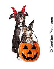 Puppy With Kitten in Haloween Pumpkin