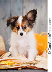 puppy with pumpkin
