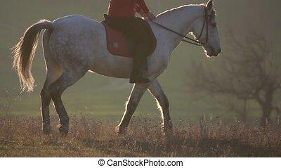 pur-sang, jockey, stallion., mouvement, lent, équitation, blanc