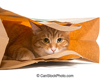 Purchase - Red cat sitting in a paper bag, isolated on white