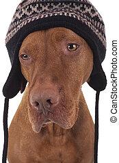 dog wearing a winter hat
