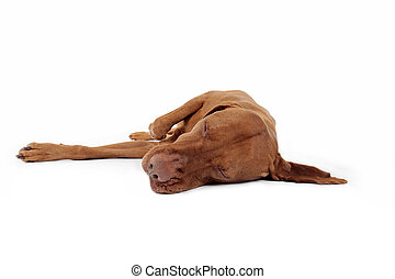 dog laying on its side