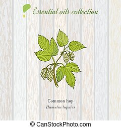 Pure essential oil collection, hop. Wooden texture...
