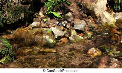 Pure fresh water stream in forest
