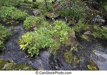 Pure mountains stream