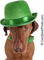 dog with green hat