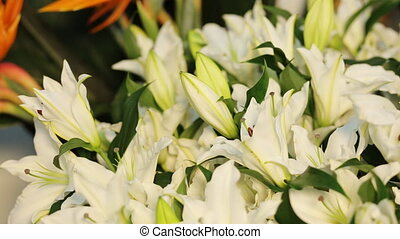 Pure white lily flowers in a store.