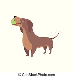 Purebred brown dachshund dog playing with ball vector Illustration on a white background