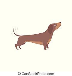 purebred, cachorro marrom, ilustração, vetorial, fundo, branca, bassê