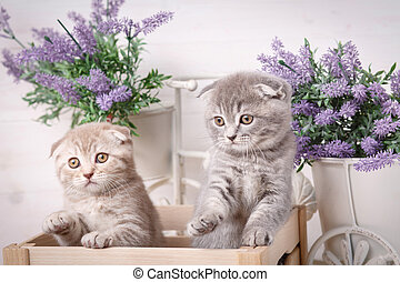 Purebred cats. Pets. A couple of funny kittens