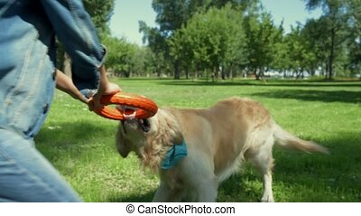 Purebred dog playing with little boy in the park