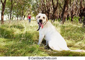 Purebred dog - Portrait of purebred dog looking at camera ...