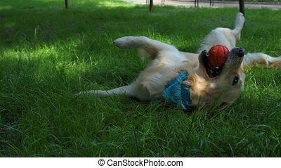 Purebred dog resting in the grass - True enjoyment....