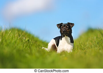 Purebred dog - Shot of purebred dog. Taken outside on a...