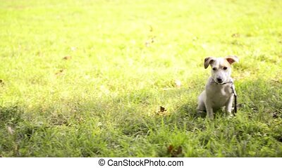 Purebred dogs sitting in park