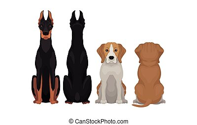 Purebred Dogs Sitting on Hind Legs Front and Back View Vector Set