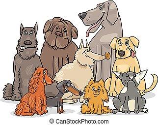 purebred, grupo, perro, caracteres