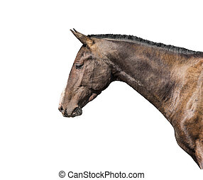 Purebred horse isolated on white background.