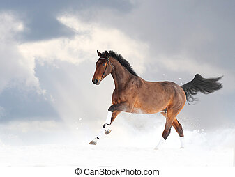 Purebred horse running in snow under cloudy sky