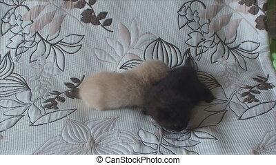 purebred kittens of different colors lie on the bed