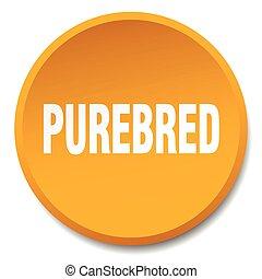 purebred orange round flat isolated push button