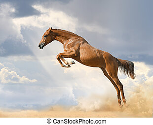 purebred, paard springend, jonge
