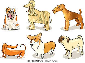 purebred, perros